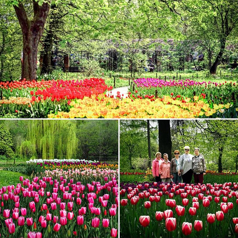 ivanteevka botanic 2021